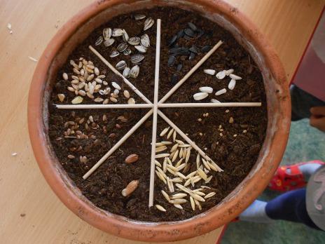 Zahradníkův rok v 1. odd