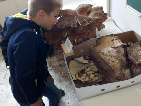Druháci na výstavě hub