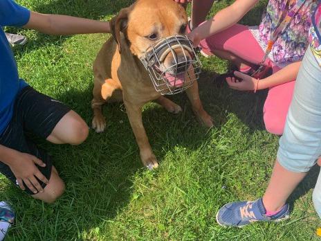 Návštěva psího útulku