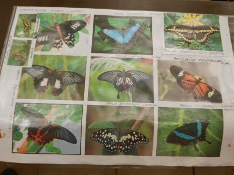 Výlet 3. C a 4. C za motýly